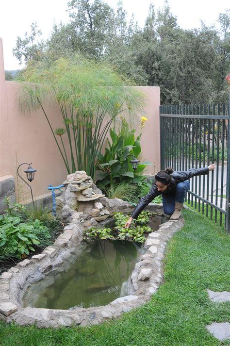 Mantenimiento de plantas acuáticas en fuente de agua ...