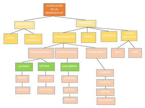 Mapa conceptual de biomoléculas orgánicas | ® Gifs y ...