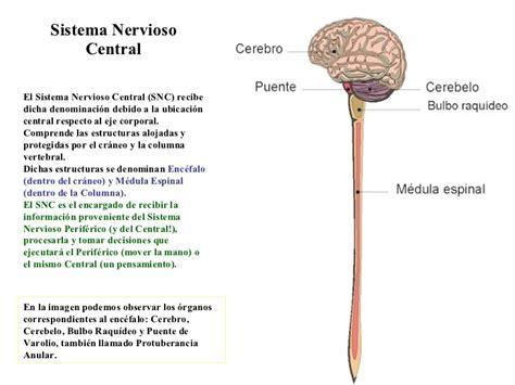 Mapa conceptual del sistema nervioso Central y Periférico ...