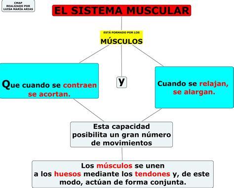 Mapa conceptual Musculos del Cuerpo Humano ...
