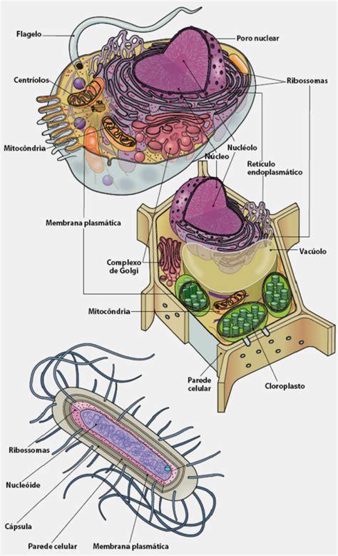 Mapa Mental: Tipos de Células - Desconversa