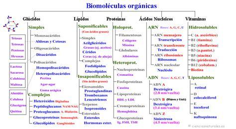 Mapasconceptuales2bio | cienciasnaturales.es de José ...