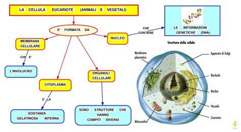 Mappa concettuale: Cellula eucariote • Scuolissima.com