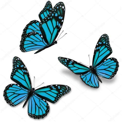 mariposa azul — Foto de stock © thawats #64978267
