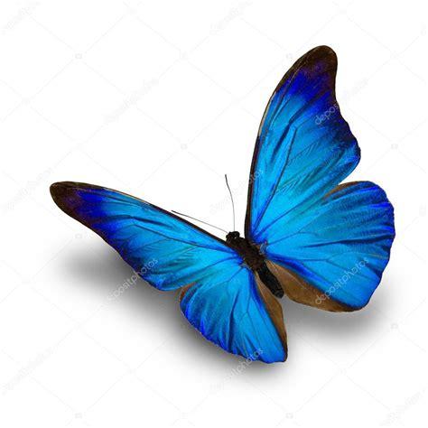 mariposa azul volando — Fotos de Stock © thawats #99863048
