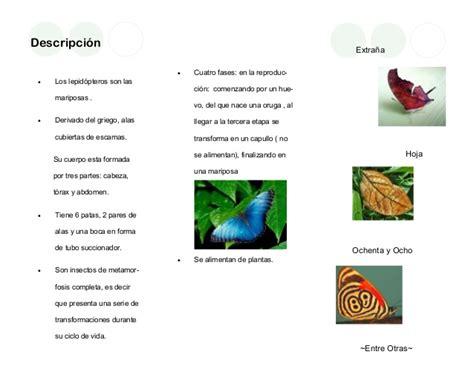 Mariposa folleto