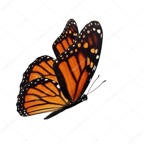 mariposa monarca volando — Fotos de Stock © thawats #58491293