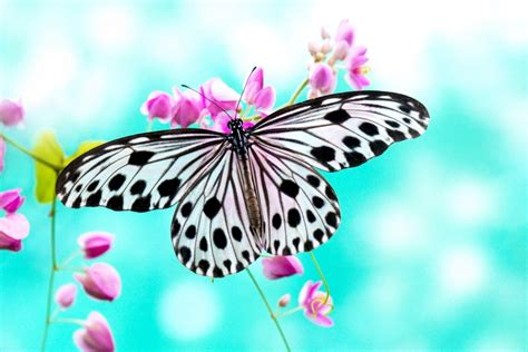 Mariposa posada en unas florecillas rosas  73408