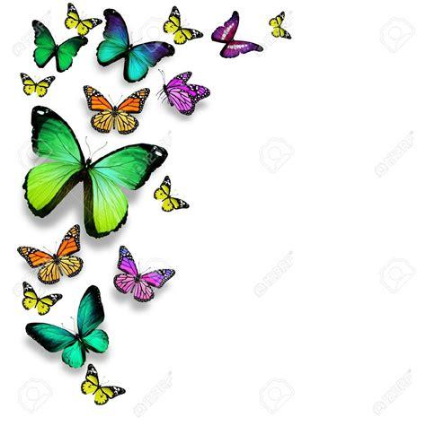 mariposas - Buscar con Google | colores a mogollón ...