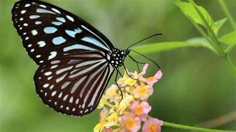 Mariposas: curiosidades y fotos - Hogarmania