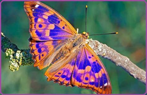 Mariposas De Colores Exóticos Para Disfrutar | Imagenes De ...