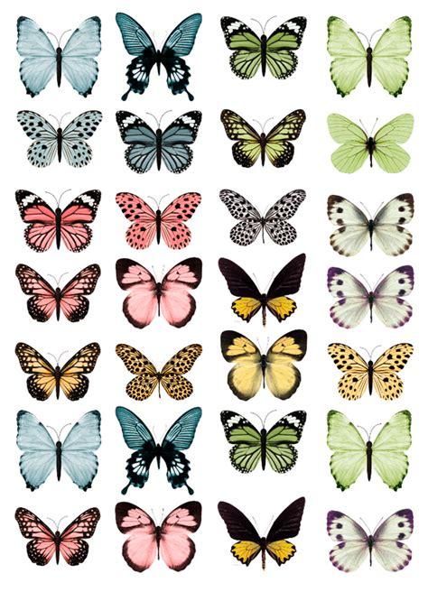 Mariposas De Colores. Premium Hojas Cada Tipo De Mariposas ...