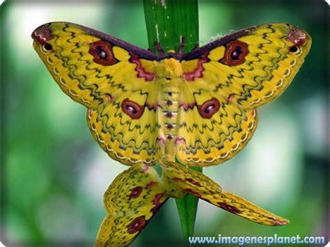 mariposas de colores raras - Buscar con Google | ♡VUELA ...