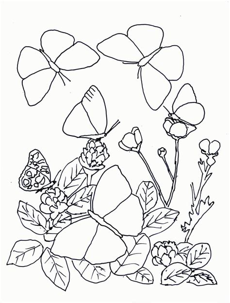 Mariposas | Para Colorear Gratis