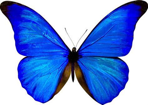 Mariposas Para Invitacion Azul Related Keywords ...