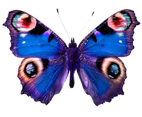 Mariposas   Toda la información sobre las Mariposas ...