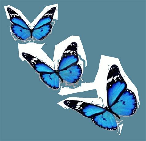 mariposas volando gif sin fondo 9 | GIF Images Download