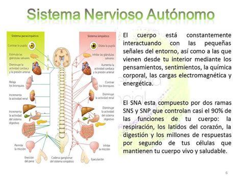 Más de 10 ideas increíbles sobre Sistema nervioso autonomo ...