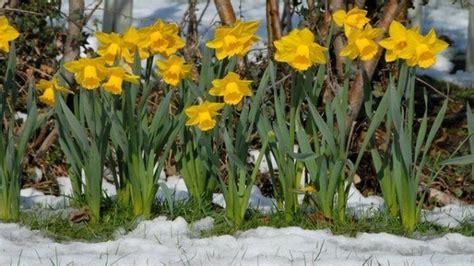 Más de 100 Fotos de Decoración de jardines: Ideas para ...