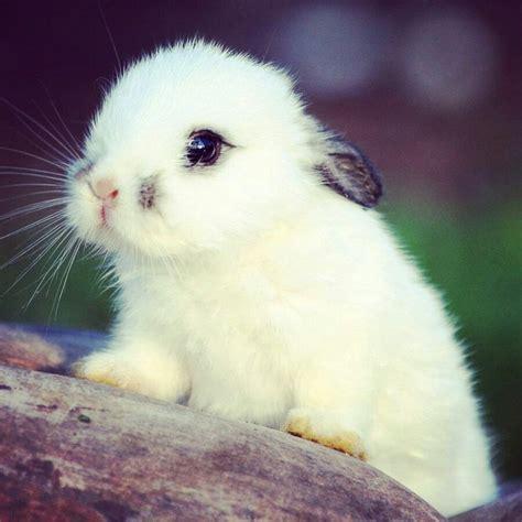 Más de 20 ideas increíbles sobre Animales kawaii en ...