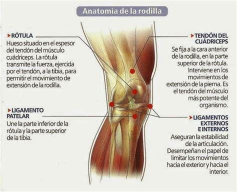 Más de 25 ideas increíbles sobre Anatomía de la rodilla en ...