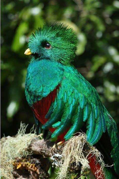 Más de 25 ideas increíbles sobre Aves exóticas en ...