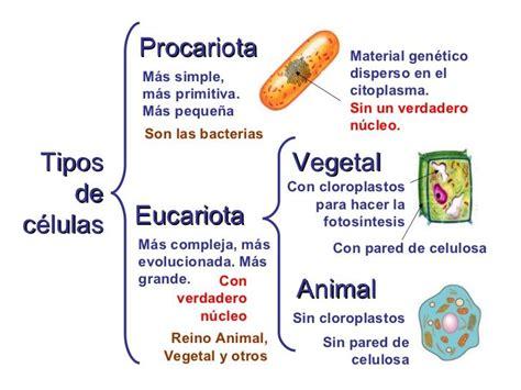Más de 25 ideas increíbles sobre Celula Eucariota Vegetal ...