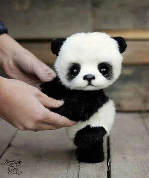 Más de 25 ideas increíbles sobre Imagenes de pandas ...