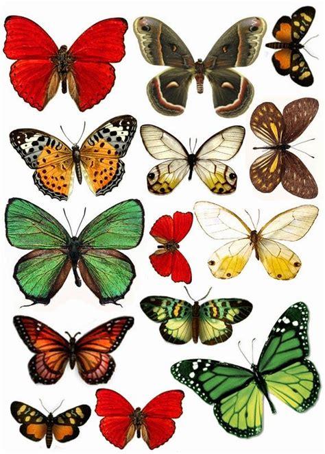 Más de 25 ideas increíbles sobre Mariposas para imprimir ...