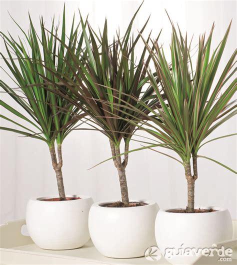 Más de 25 ideas increíbles sobre Plantas de interior en ...