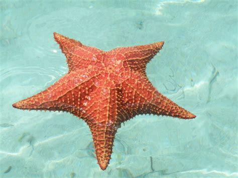 Más Información sobre la estrella de mar | Informacion ...