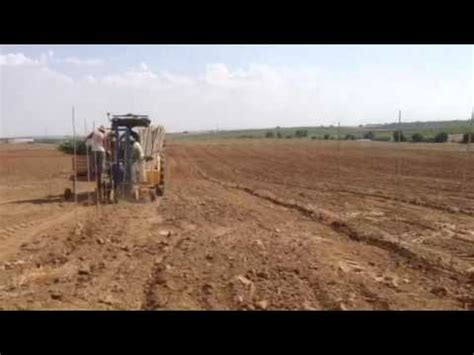 MC OLIVO plantado superintensivo en Portugal con nueva ...