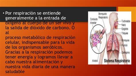 Mecanismo de respiración, intercambio de gases