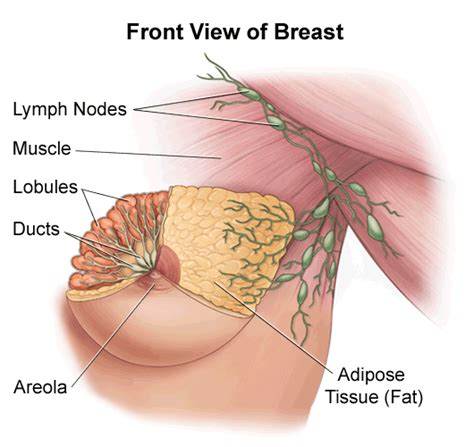 Medical Pictures Info – Breast Cyst