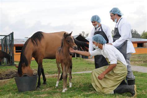 Medicina Veterinaria y Zootecnia   Bachilleres Transformadores