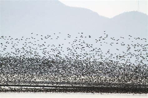 Medio Ambiente   Las aves migratorias tienen una vida más ...