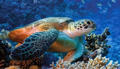 Mediterraneoweb: FLORA E FAUNA MARINA del MEDITERRANEO