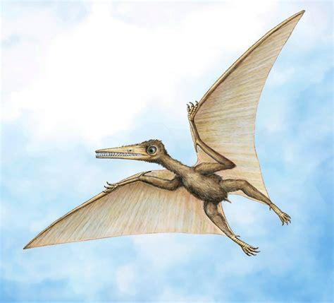 Meet Kryptodrakon: Oldest Known Pterodactyl Found in China