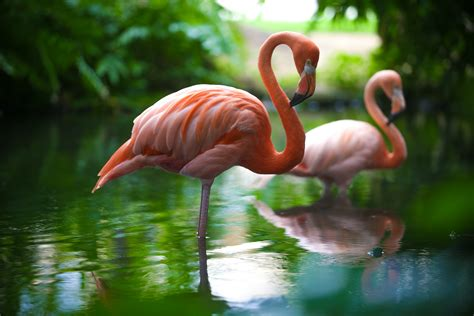 Meet the Famous Flamingos of Dreams Punta Cana! – Day ...