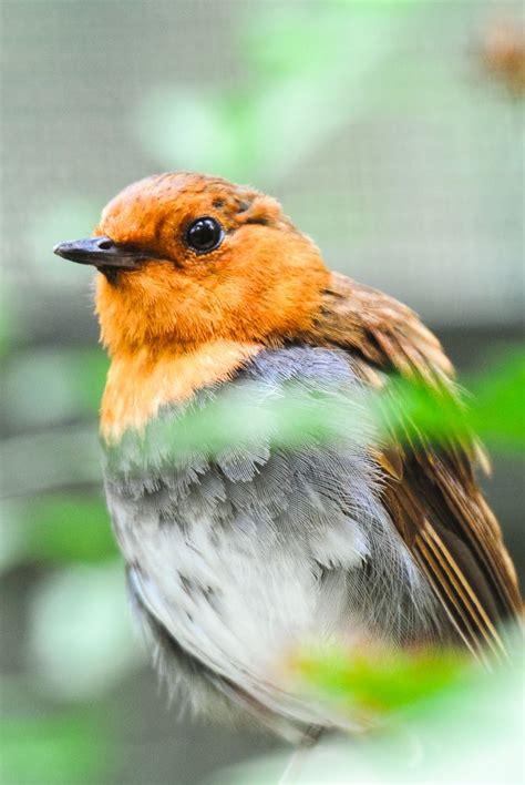 Mejores 13 imágenes de pajaros en Pinterest | Pájaros ...