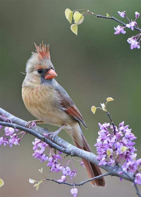 Mejores 29 imágenes de Fotos Bonitas de Aves en Pinterest ...