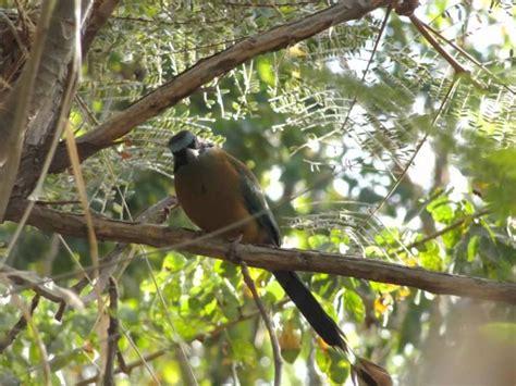 Mejores 344 imágenes de AVES en Pinterest   Pájaros ...