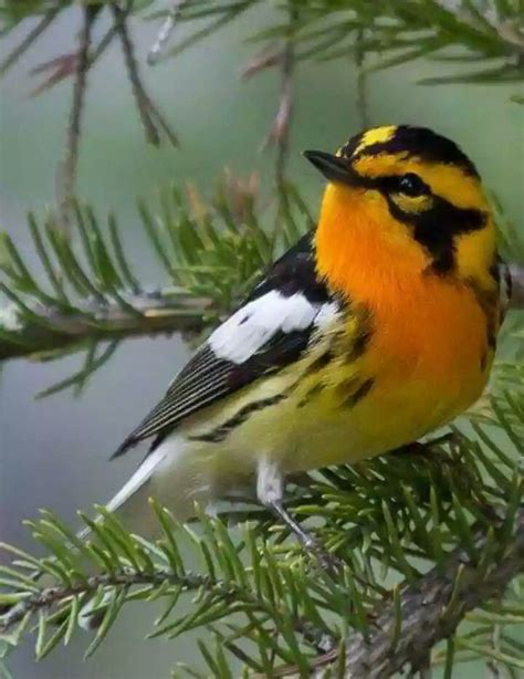 Mejores 365 imágenes de BIRDS OF A FEATHER en Pinterest ...