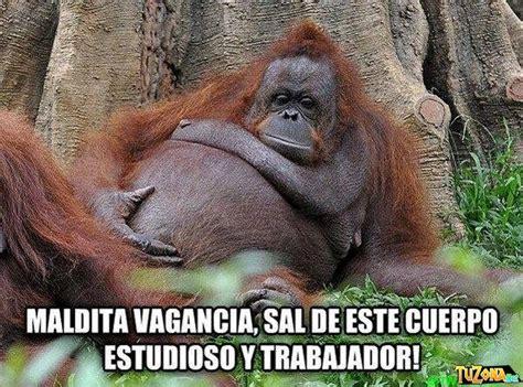 Mejores 8 imágenes de Monos Chistosos en Pinterest ...