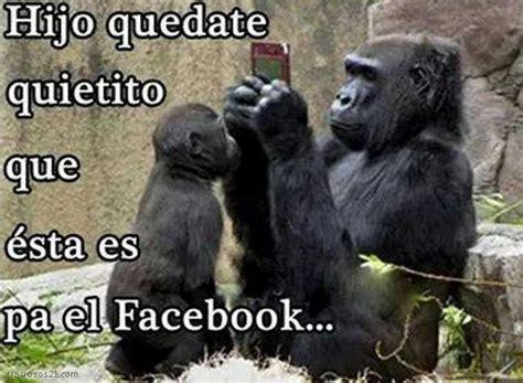 Mejores Imagenes De Gorilas Chistosos Con Gestos ...
