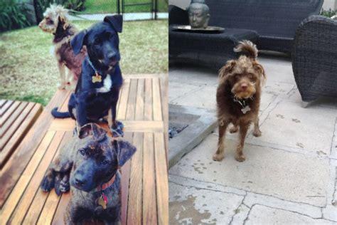 Melanie Griffith pide la custodia de las 3 mascotas que ...