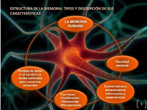 Memoria humana power point