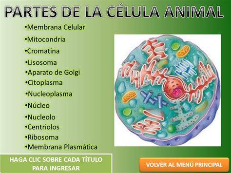 MENU PRINCIPAL LA CÉLULA ANIMAL PARTES DE LA CÉLULA ANIMAL ...