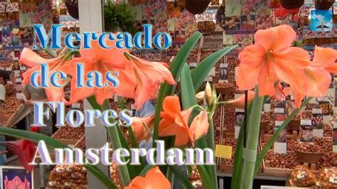Mercado de las flores de Amsterdam Bloemenmarkt   YouTube