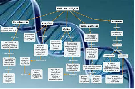 Metabolismo Celular: Moléculas Biológicas